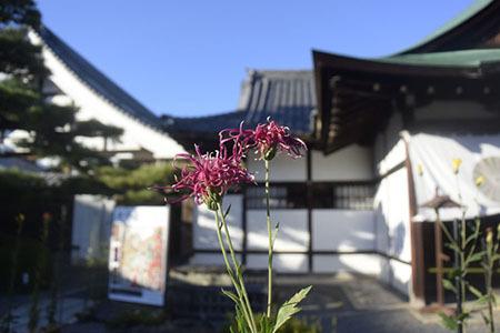 大覚寺大沢池015.JPG